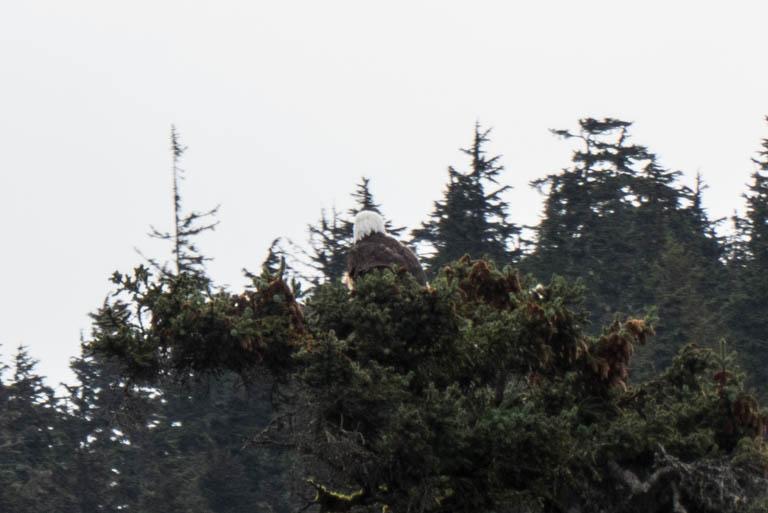 Alaska-N-594