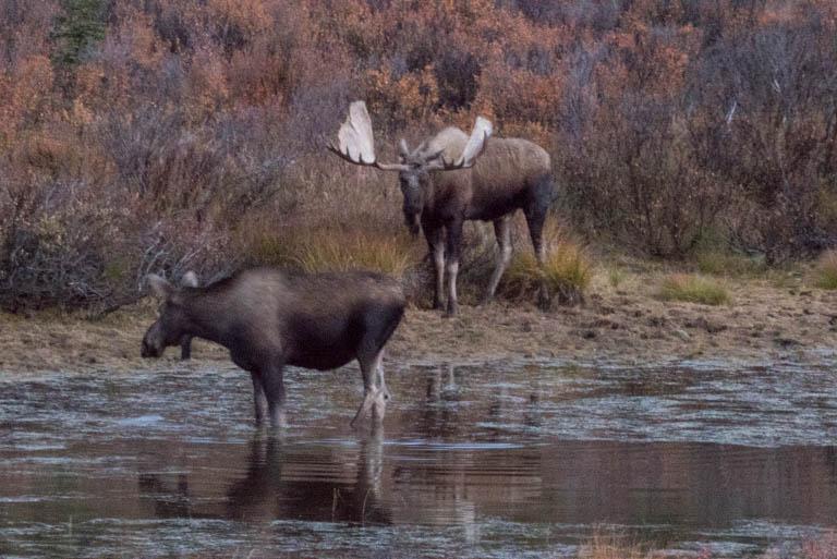Alaska-1816