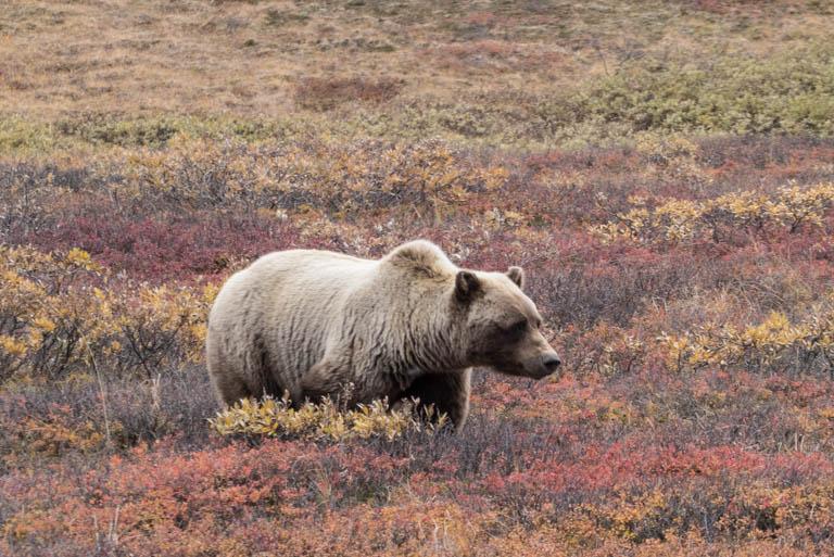 Alaska-1997